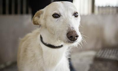 Respeto Animal: Fundación Affinity alerta de que la cifra de abandono se estanca en España