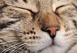 Chien ou chat mais vous êtes allergique