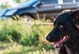 Checklist de viajes en coche con perros