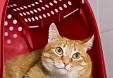 Checklist de viajes en coche con gatos