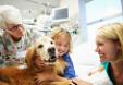 Le pouvoir thérapeutique des animaux