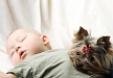 Préparer son chien à l'arrivée d'un bébé