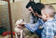 protectoras de animales de España estudio sobre abandono