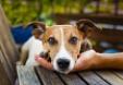 Vida Verde de RTVE: Los animales no son cosas