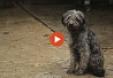 Vídeo Estudio de Abandono y Adopción 2017