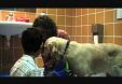 Conseguir la atención de un niño con autismo con un perro